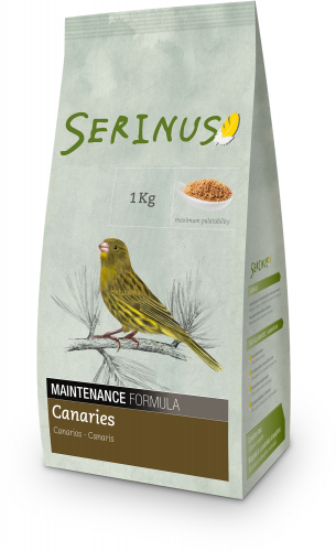 Serinus Maintenance Canary