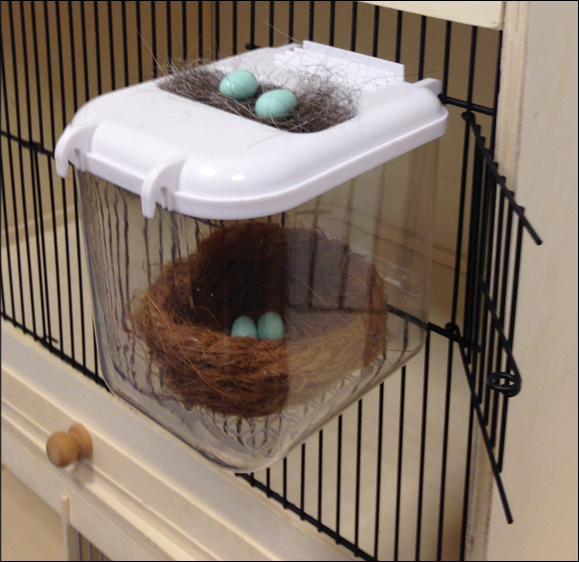 Clear View Nest Box Garden Feathers Bird Supplies