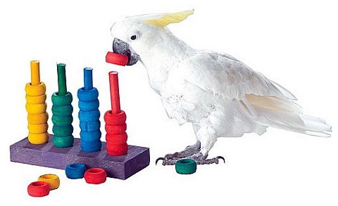Zoo-Max Teacher Toy Parrot Learning Game