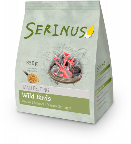 Serinus Hand Feeding Wild Birds (Native Birds)