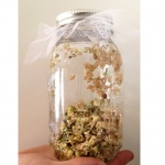 Sprouting Jar