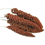 Millet Sprays French Red
